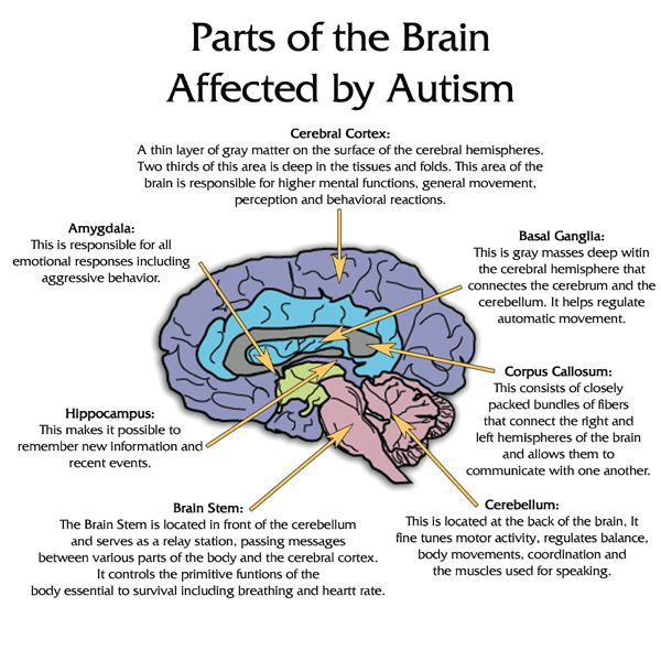 a deeper analysis of the disorder known as autism